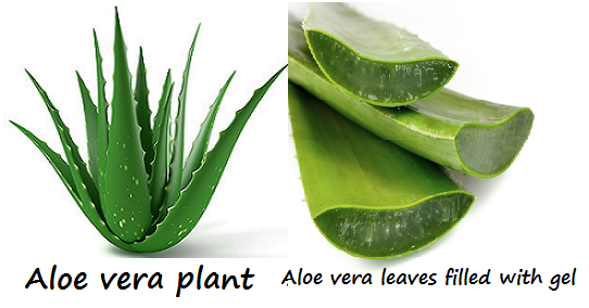 How about trying aloe vera for psoriasis 2
