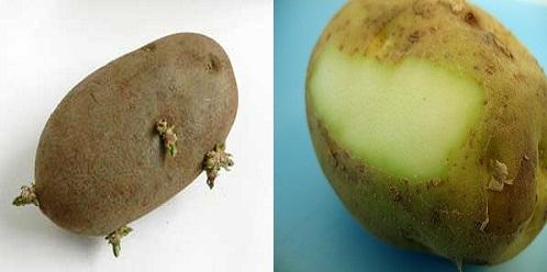 potato nightshades psoriasis