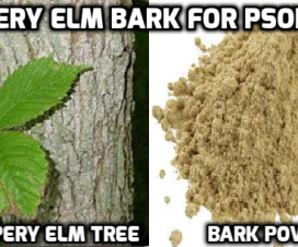 Slippery elm bark tea for psoriasis